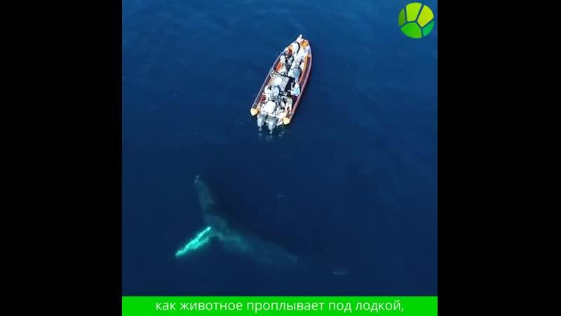 Любопытный кит подплыл к лодке