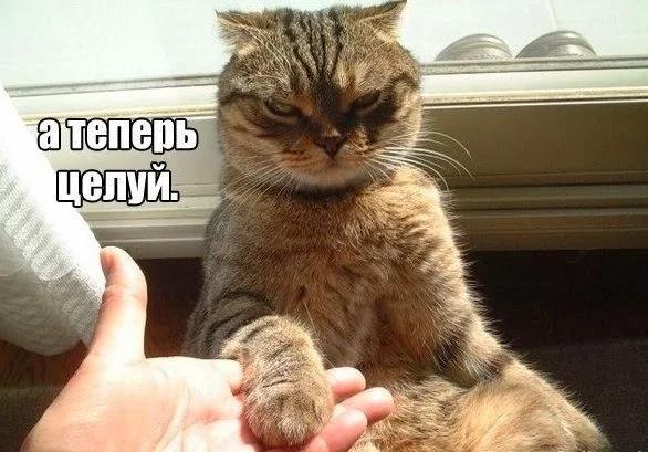 A2zrlxgVkWY - Лучшие коты интернета на этой неделе