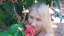 Как умер Амба Мимолётность жизни Мимолётность красоты Сегодня жизнь есть завтра нет