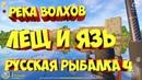 Лещ и Язь фарм река Волхов рр4 русская рыбалка 4 russian fishing 4 rf4 Алексей Майоров