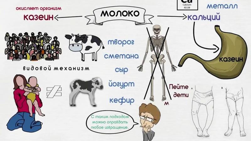 Рисованый мульт о вреде молочных продуктов