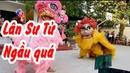 Múa lân Sử Tử quá man Lion Dance lion dance too man Tran Vlog
