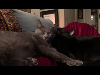Even though i named my cats after morticia and gomez addams, i never expected them to be ...