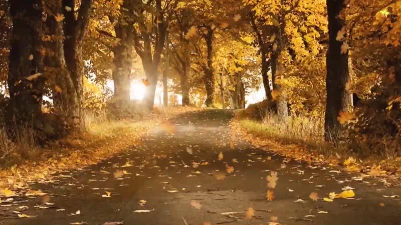 Осень c карточками Домана