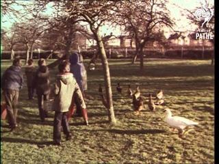 Juniper Mill School - London (1975)