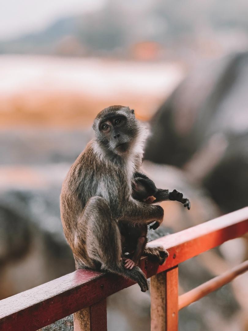Лос-Анджелес запретил эксплуатацию диких животных ради развлечений, изображение №1