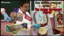 Печень - Как работает печень, какие функции выполняет. Общая пищеварительная система Анатомия