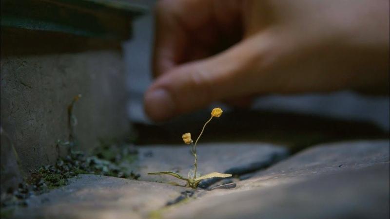 LAIKA The Boxtrolls Nature of Creation