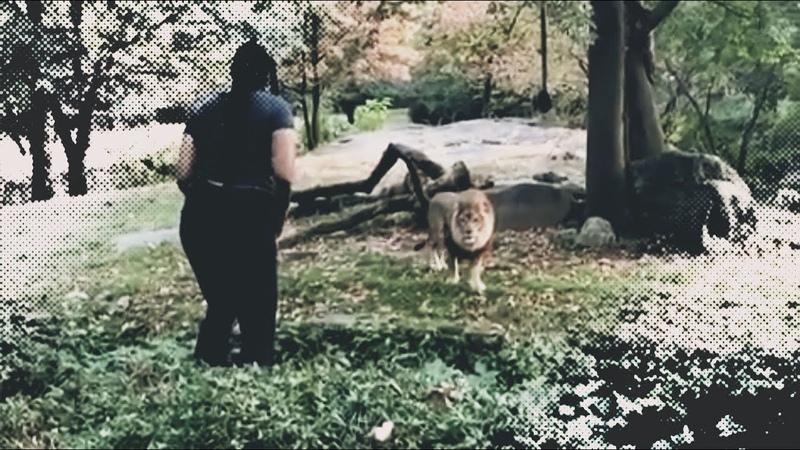 Девушка забралась в вольер ко льву и его реакция сразила всех