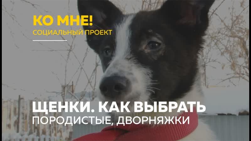 «Ко мне!» дворняжка или породистая собака. Как выбрать щенка