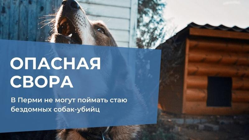 В Перми не могут поймать стаю бездомных собак убийц