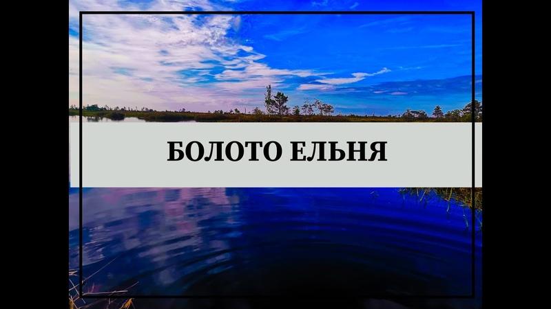 9 Болотный массив Ельня