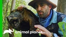 Learn About The Alligator Snapping Turtle With Coyote Peterson! | Brave The Wild