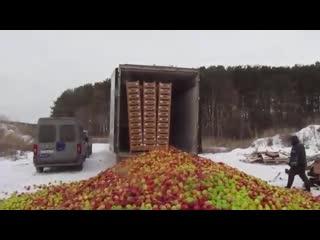 СРОЧНЫЕ НОВОСТИ! Уничтожение яблок