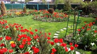 Мой сад! Майская зарисовка в летний день!