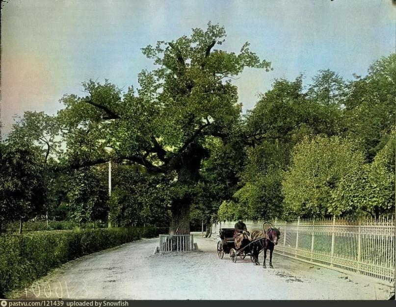 Эксклюзивные цветные фотографии Петербурга начала 20 века, изображение №7