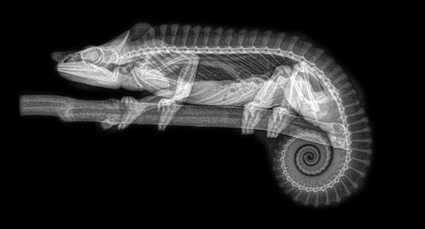Рентген: уникальный взгляд на анатомические особенности различных видов животных