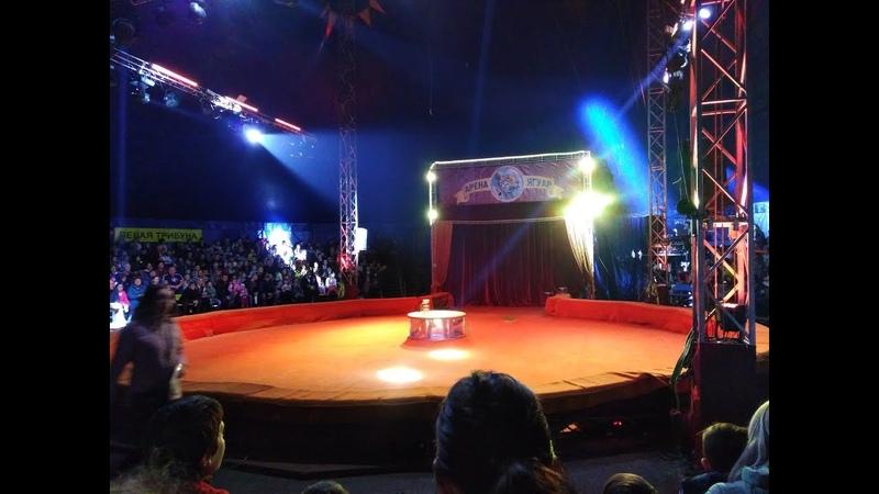 Шоу и выступления в цирке-шапито Арена-Ягуар
