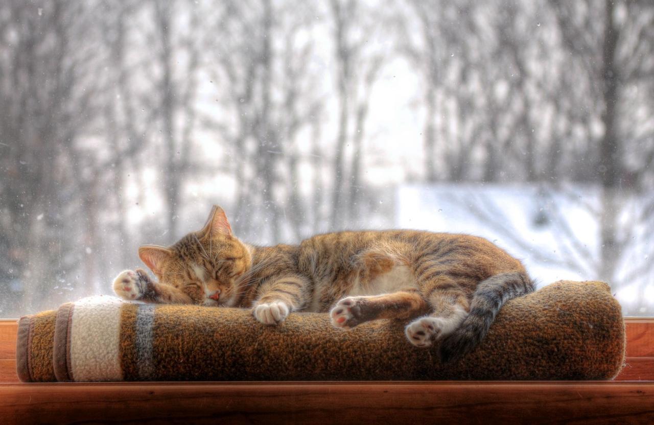 Обои на рабочий стол зима коты уют