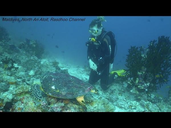 Maldives North Ari Atoll Rasdhoo Channel Дайвинг мальдивы