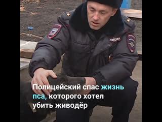 Полицейский спас жизнь пса, которого хотел убить живодёр