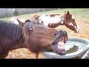 Самые Смешные Приколы С Животными! 10 приколыживотныеюмор