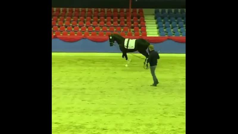 GLOCK's Dexter Oldenburger stallion pre selection in Vechta