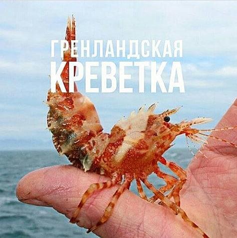 этом морские обитатели татарского пролива картинки глубокий