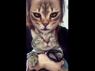 Котики в акуе