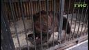 Самому крупному хищнику самарского зоопарка медведю Умке исполнилось 22 года