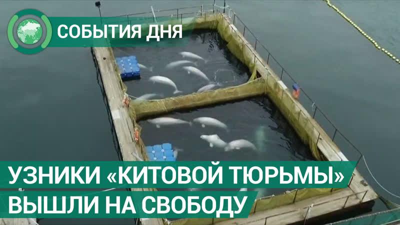 «Китовая тюрьма» в Приморье отпустила всех узников на свободу. События дня. ФАН-ТВ