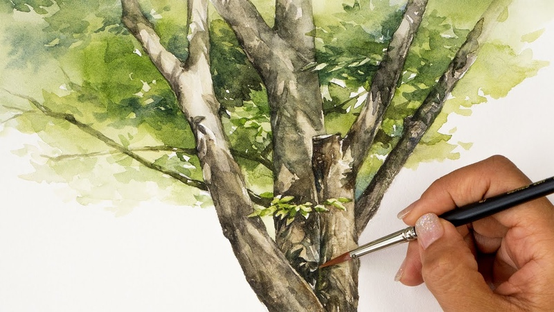 Watercolor Tree Painting A Shaded Tree