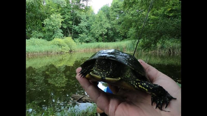 Клёвая рыбалка в лесном пруду! Не только карась любит опарыша!