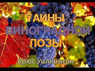 Б.УИЛКИНСОН - ТАЙНЫ ВИНОГРАДНОЙ ЛОЗЫ - 7 ЧАСТЬ