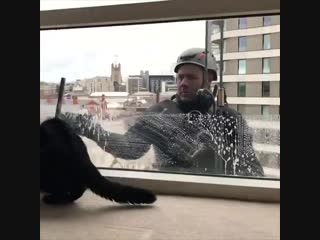 Котейка помогает мыть окна