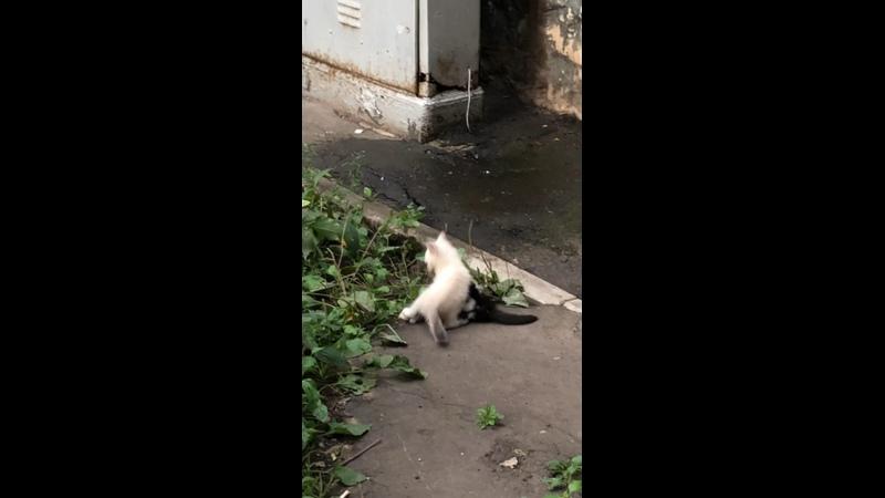 Видео от Ирины Фирулиной