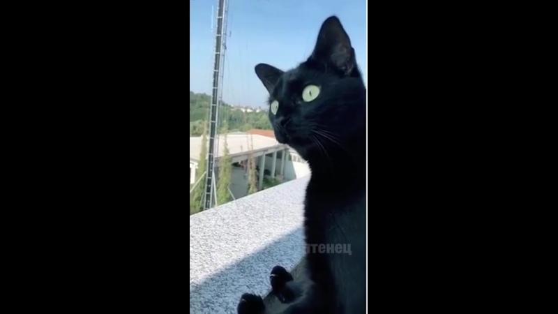 Любопытная Варвара