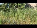Видео от Азизы Ибрагимовой