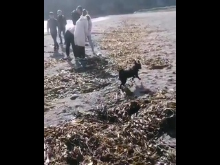 Экологическое бедствие на Камчатке.mp4