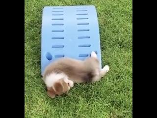 Оказывается собаки тоже немного жидкость