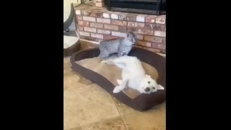 Кот прохвост