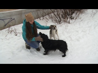Копейчанка спасает бездомных животных