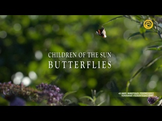Дети Солнца - Бабочки | 2 серия из 2 | 2017 | HD 1080