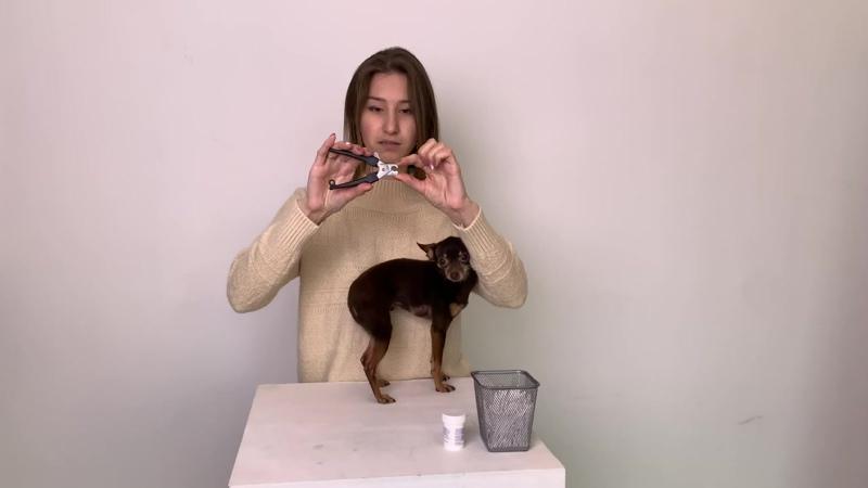 Как правильно стричь когти собаке?