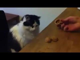 Кручу - верчу, кота запутать хочу! (6 sec)