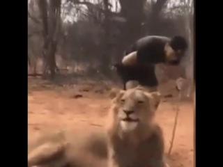 Лев чихнул, а мужик обделался...Пчи :)