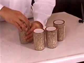 Выращивание Psilocybe cubensis