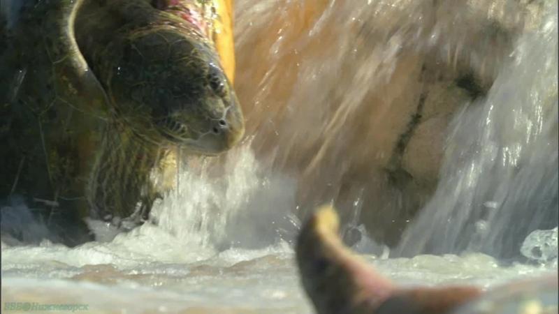 BBC Большой Барьерный риф 3 На рифе и за его пределами Познавательный природа животные 2012