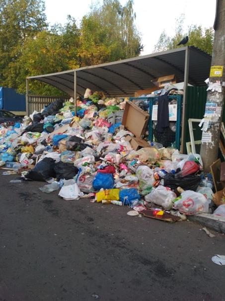 Солнечногорск, улица Рабочая дом 8, не вывозят мус...