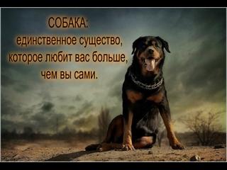 ЛБ-ЮРИЙ РОМАНОВСКИЙ---ФИЛЬМ О  ВЕРНОМ ДРУГЕ